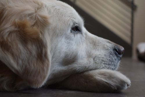 Does Your Dog Suffer From Separation Anxiety?