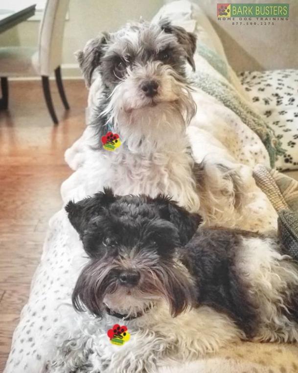 Zoey & Sadie
